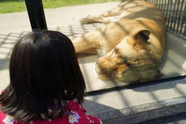 おすすめスポット!広島市安佐動物公園